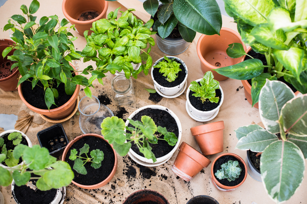 Gardening with Sue McDougall 27/04/17