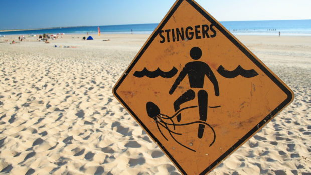 Article image for What to do with a jellyfish sting