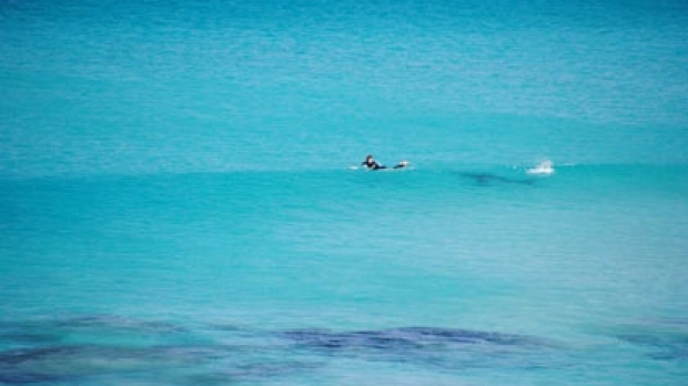Article image for Busselton surfer buzzed by shark