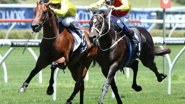 Article image for Railway Stakes sweep