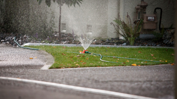 Article image for Water Corp wants a rethink on lawn verges to save water