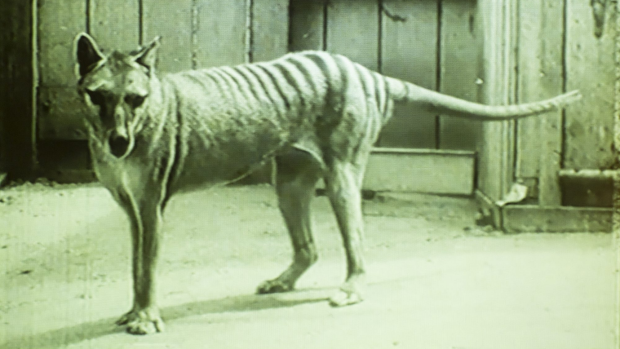 Article image for Book of the Week: Stripes in the Forest