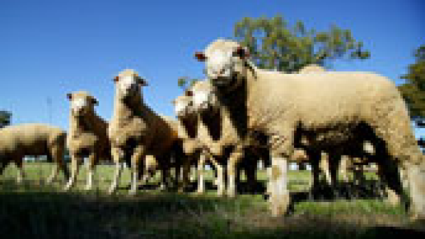 Article image for Live export deaths