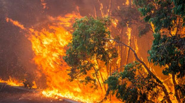 Article image for Bushfire shake up