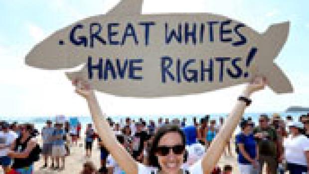Article image for Senate bid to end shark cull