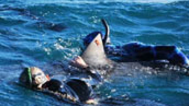 Article image for Swimmers save injured shark