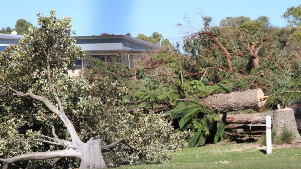 Article image for Anger over North Beach tree cull