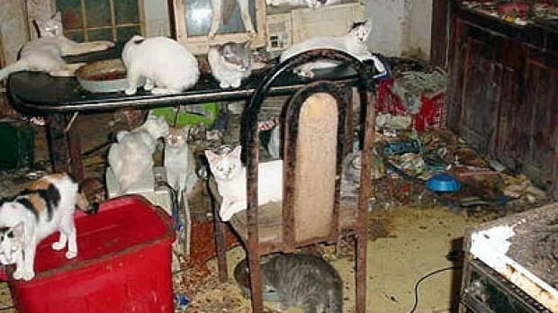 Article image for Call for vets to spot animal hoarders