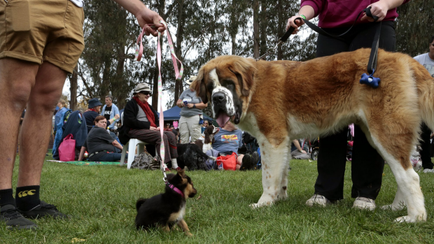 Article image for Small dogs may claim part of Fremantle