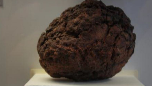 Article image for Wolfe Creek Meteorite stolen
