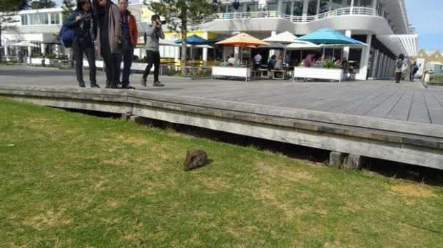 Article image for Save the Bathers Beach bunnies