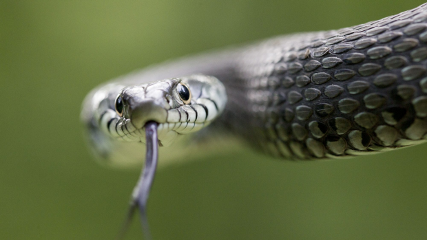 Article image for Would you know what to do if a snake bit you?