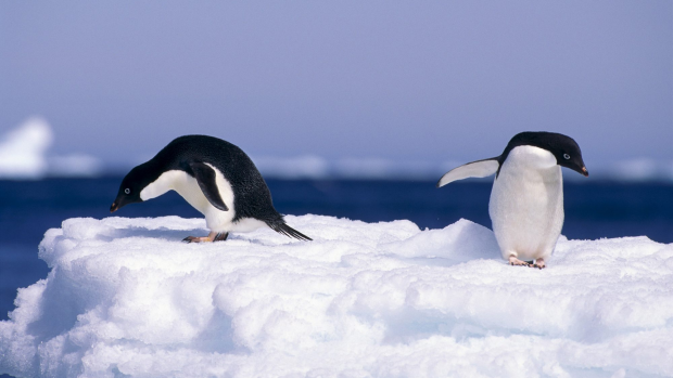Article image for Swimming… in Antarctica?
