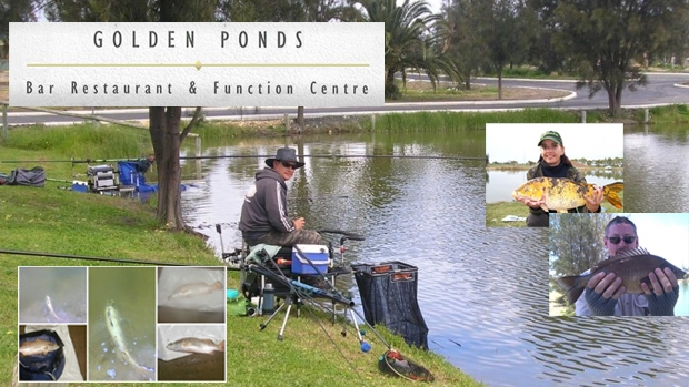 Article image for Golden Ponds Fishing Competition