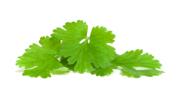 Article image for The people who love to hate coriander