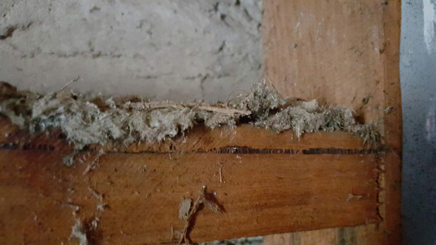Article image for Asbestos society reports DIY link to recent mesothelioma cases
