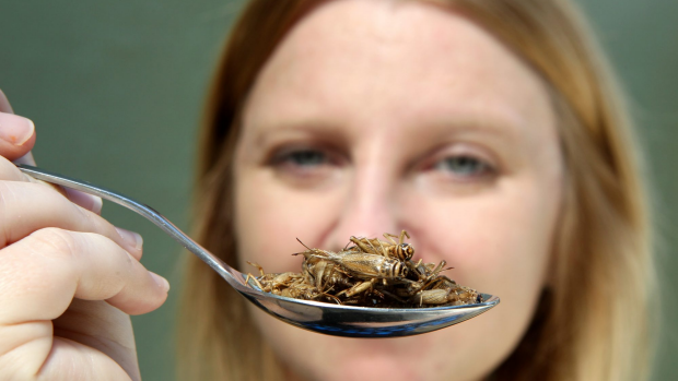 Article image for Breeding bugs for food