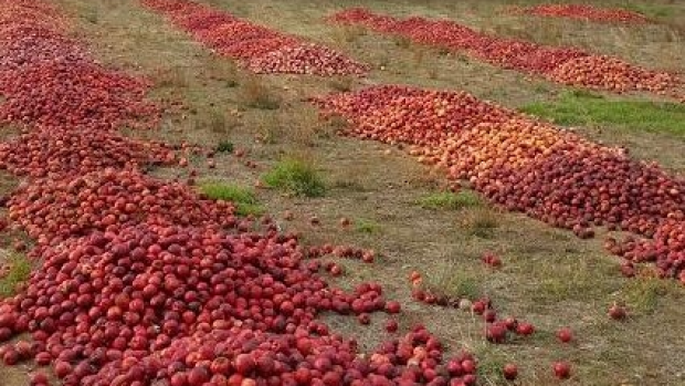 Article image for 30,000kg of WA nectarines dumped