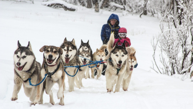 Article image for Perth Dog Sled Racer?
