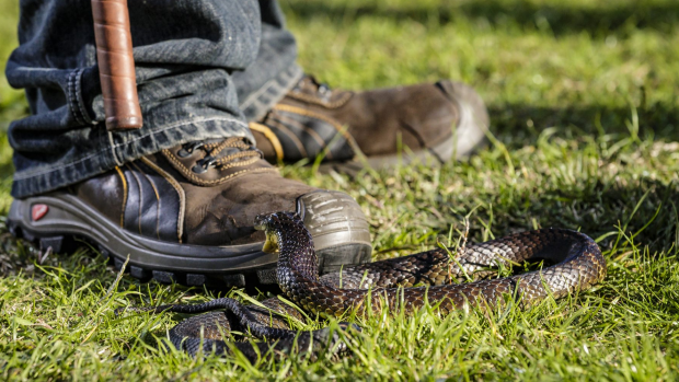 Article image for School snake bite training