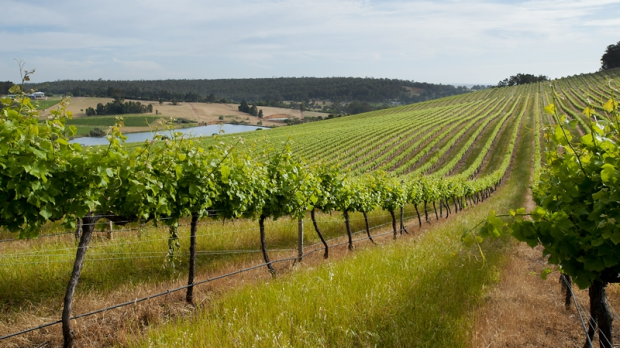 Article image for Perth Royal Show brings out wines best