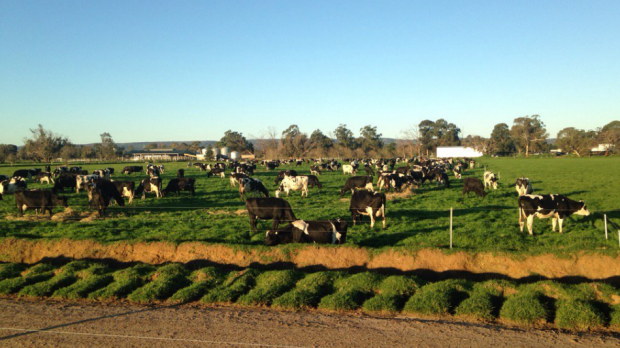 Article image for Clock ticking for WA dairy farmers