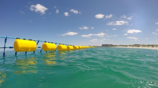 Article image for Hastie backs shark nets