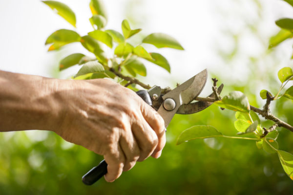 Weekend Gardening: Pruning, passion fruit and plants