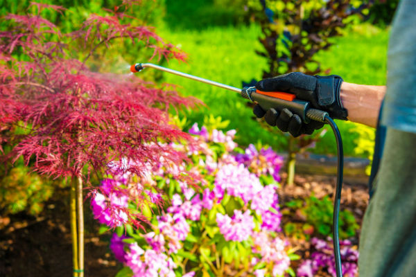 Weekend Gardening: Pests and trace elements