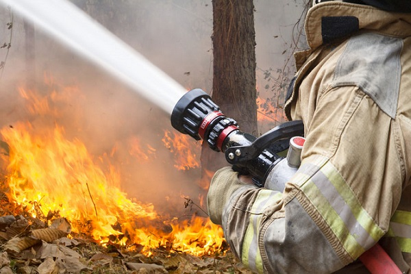 Article image for 650 hectares burnt in Yanchep fire
