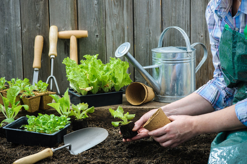 Article image for Our Gardening Expert Sue McDougall