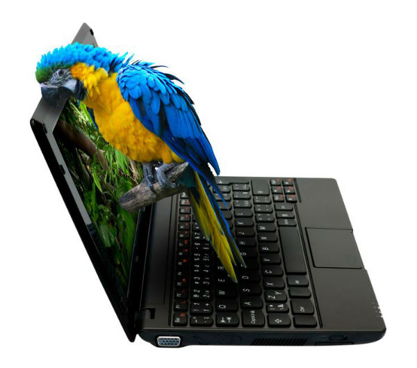 Just what did the Parrot order online?