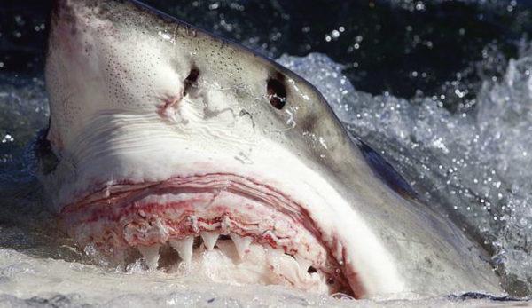 The phenomenon of shark attacks