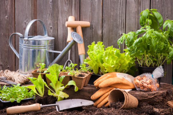 Gardening the most popular lockdown task says new research