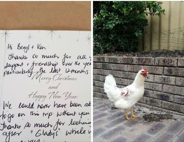 "Plot Twist: ""Gladys"" the chicken crosses the road"