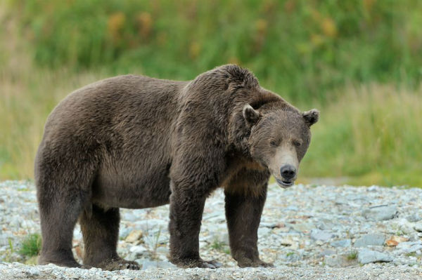 Grizzly Bears, Fires and Implosions.