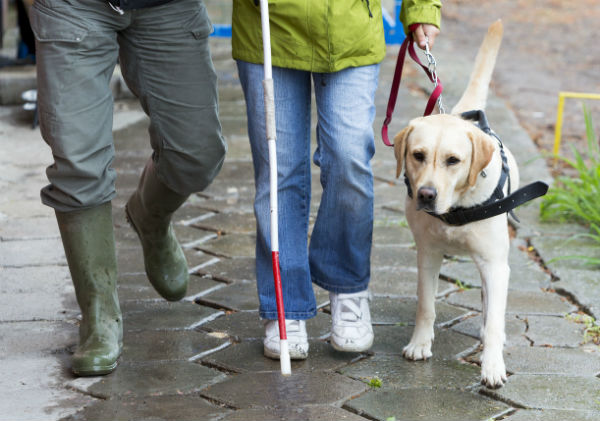 Article image for Calming Your Dog In A Storm and Hearing Aids For Dogs With Dr. Mel Criddle From Swans Vets