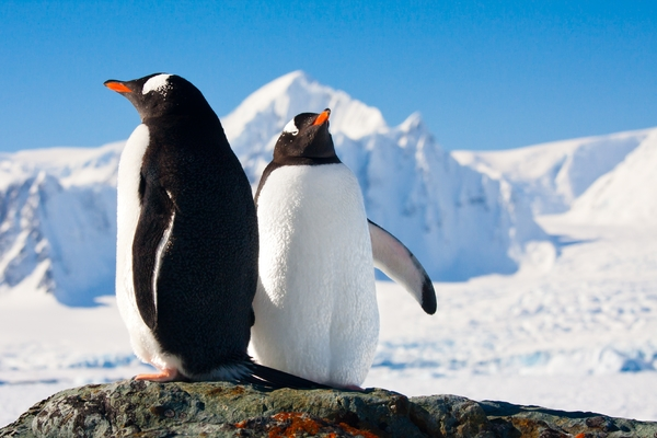 The Travel Bug goes to Antarctica and South America