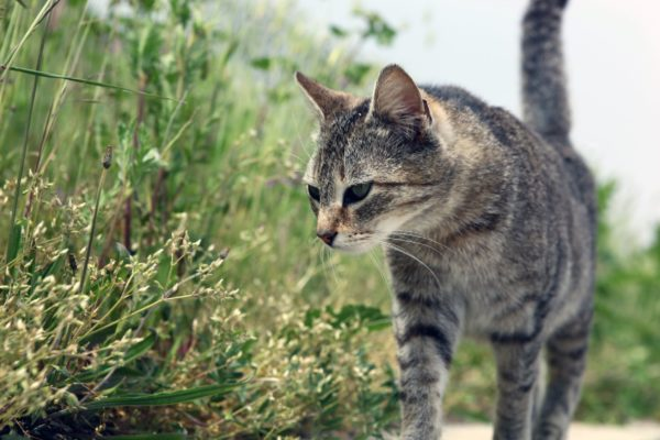 Cat Haven welcome council cats over euthanasia