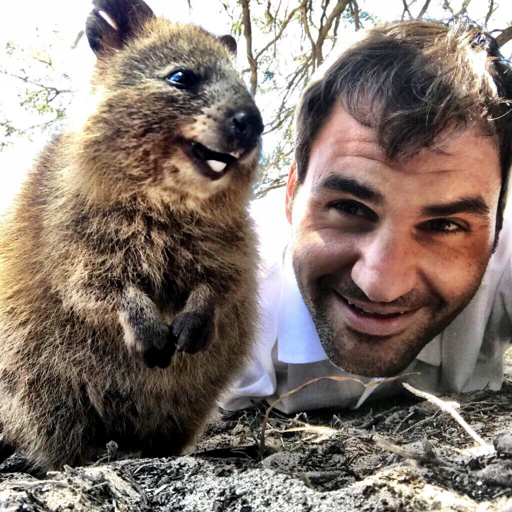 Roger's Quokka selfie reaches 581 million