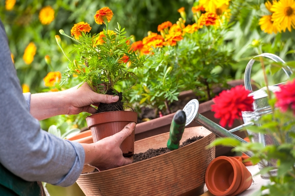 Getting Your Garden Ready for Autumn