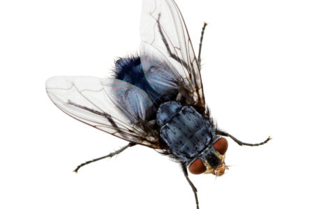 Why You Can't Swat That Fly