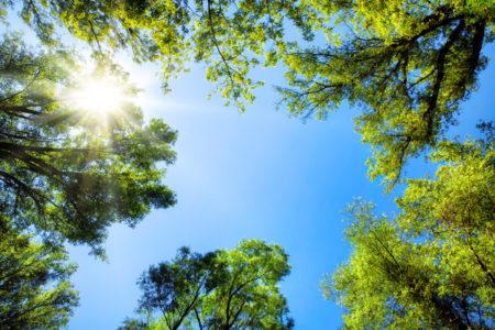 Mundaring Shire Tree Canopy Project
