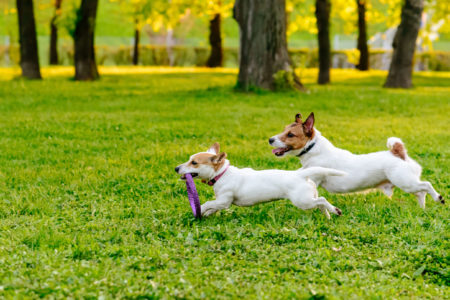 Are off-leash dog parks a good idea?