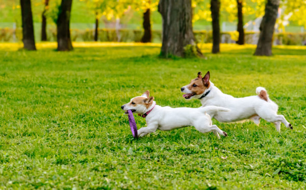 Are off-leash dog parks a good idea?