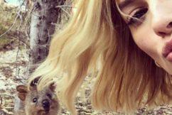 Quokka selfie sets records for Rottnest Island