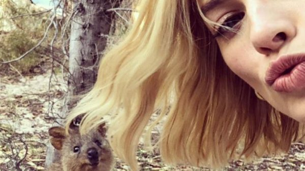 Quokka selfie sets records for Rottnest Island