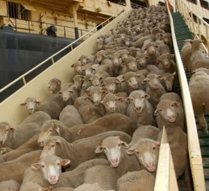 This Could Be The Last Chance For Live Export