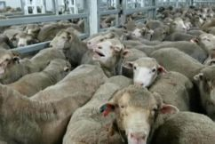 Live Export Banned During The Hottest Months
