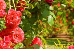 Lack of imports hits florists
